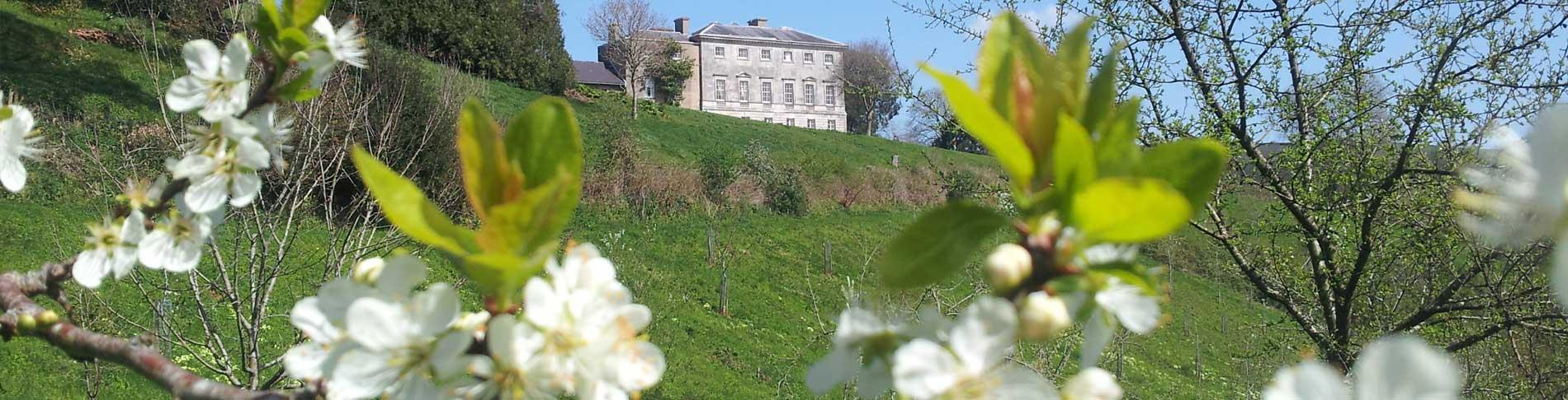 Sharpham House from the organic orchard