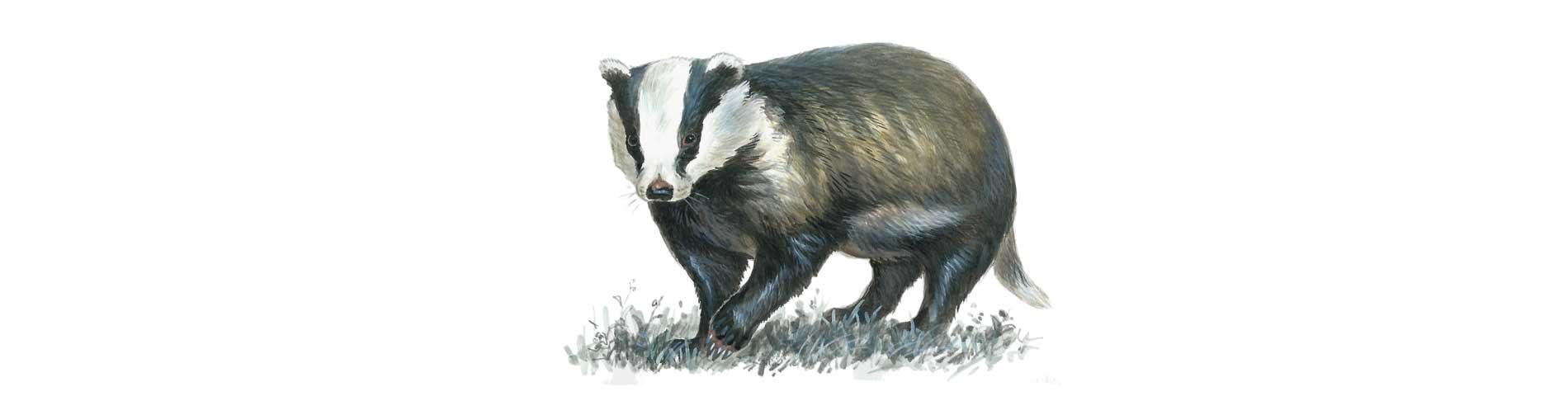 Watch badgers and bats with Mike Langman at Sharpham