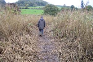 Hacking back the reedbeds