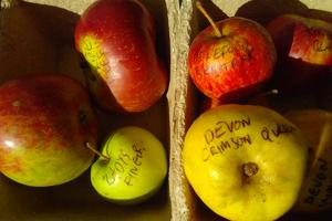 Wonderfully named apples displayed by OrchardLink at our Apple Day