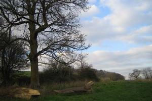 Site of the proposed Green Oak Bench at Sharpham