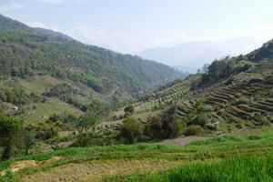 Farming terraces in the hills