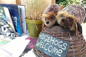 Hedgehogs are very welcome at Sharpham's Open Day
