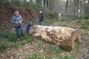 The log for the bench - near Point Field, Sharpham Woods