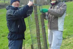 Volunteers in our organic orchard at Sharpham caring for fruit trees