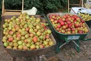 Apple Day Sunday October 9
