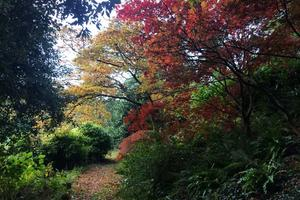 Beautiful acers along the Ladies' Walk