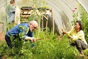 Working in The Barn's polytunnel