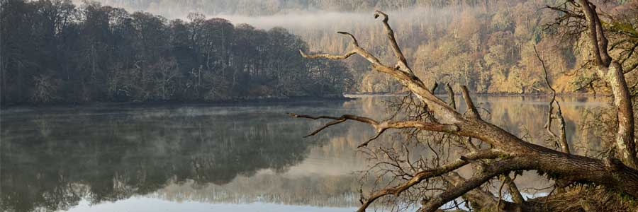 Christmas in the River Dart valley