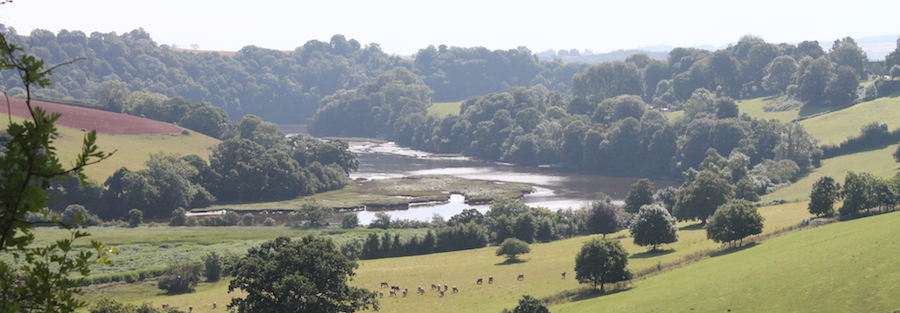 View of the River Dart on the Sharpham Estate